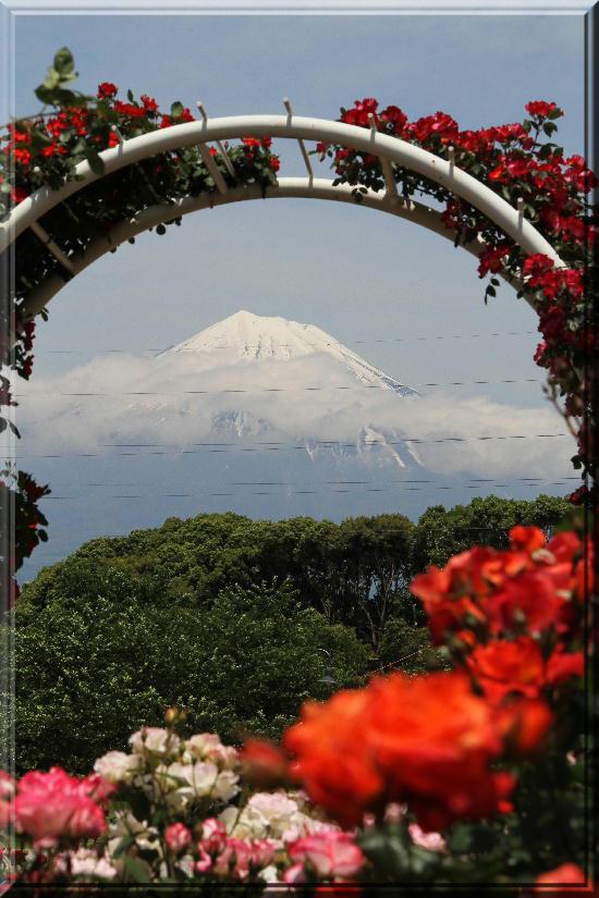 富士山と薔薇