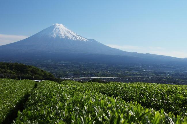 富士山とお茶畑-2 5.5