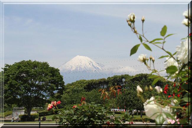 富士山と薔薇-22