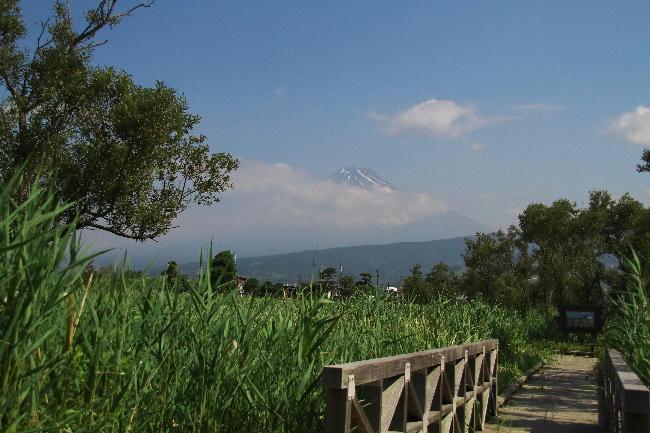浮島ヶ原 富士山