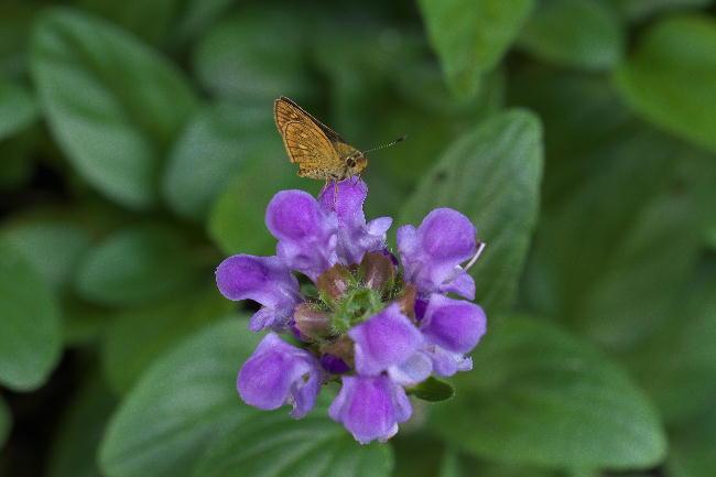 秩父宮別邸-20蝶々