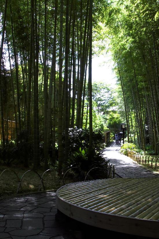 竹林の小径-1