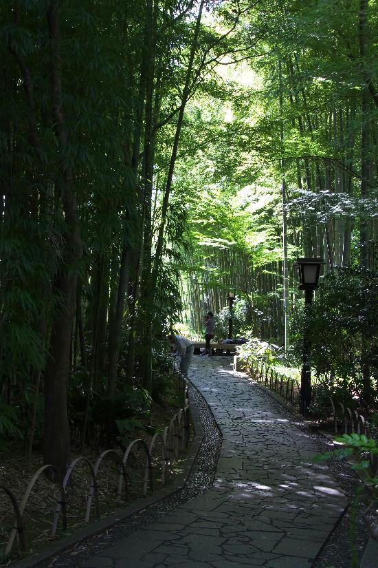 竹林の小径-2