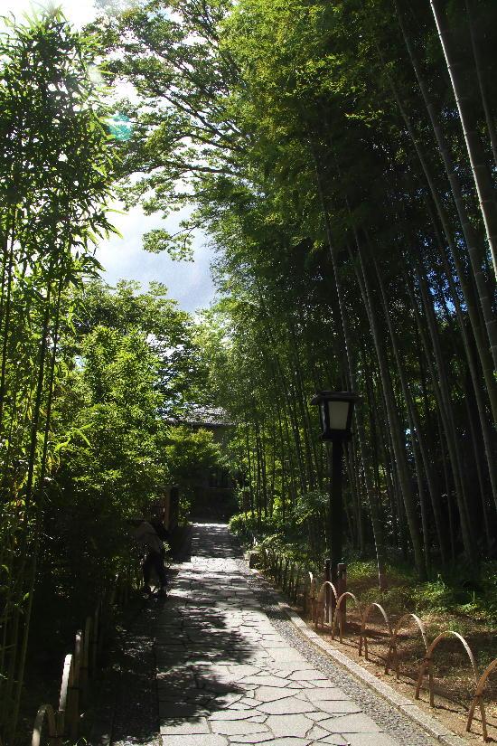 竹林の小径-3
