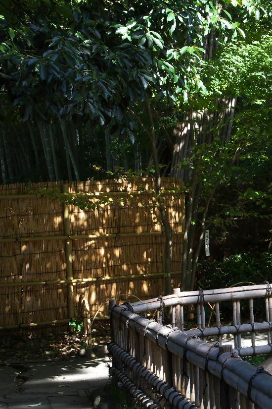 竹林の小径-4