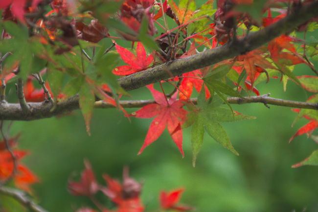 御殿場-1小さい秋