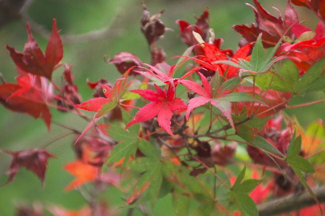 御殿場-2小さい秋