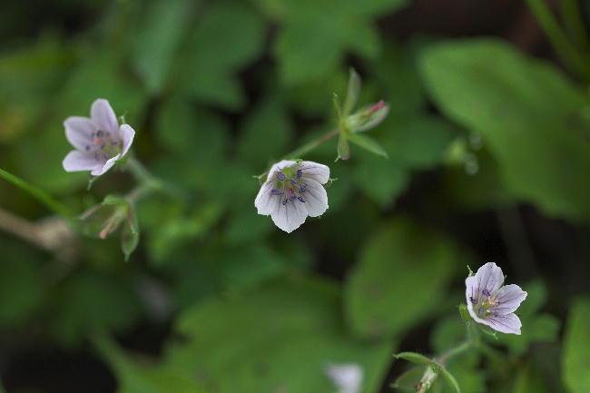 御殿場-4花