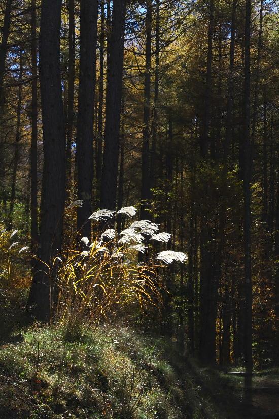 瑞牆山-2雑木林