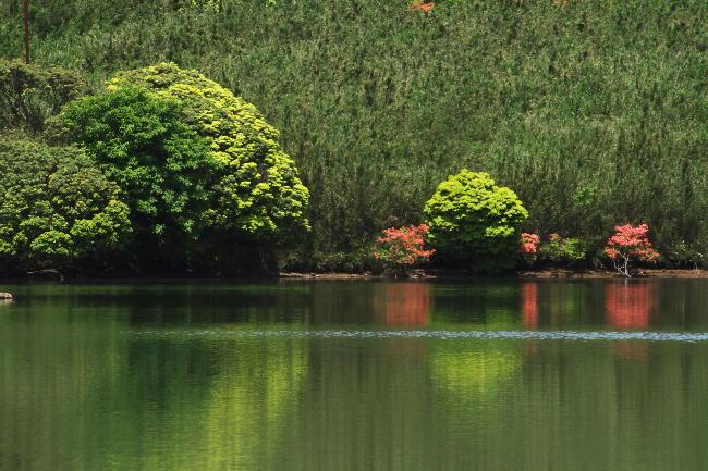 玄岳の池-2