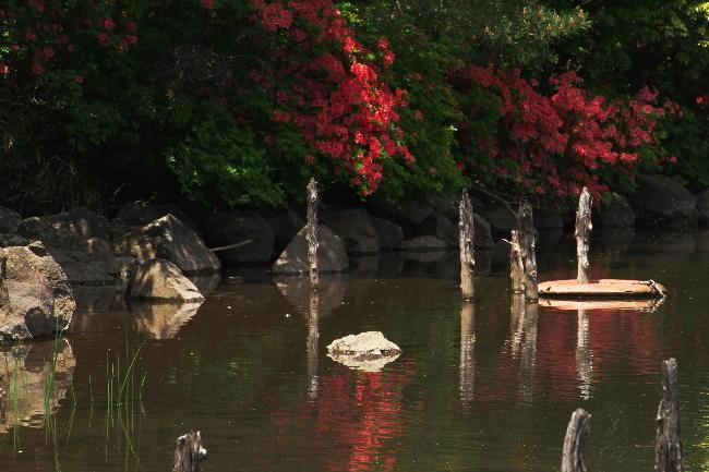玄岳の池-3