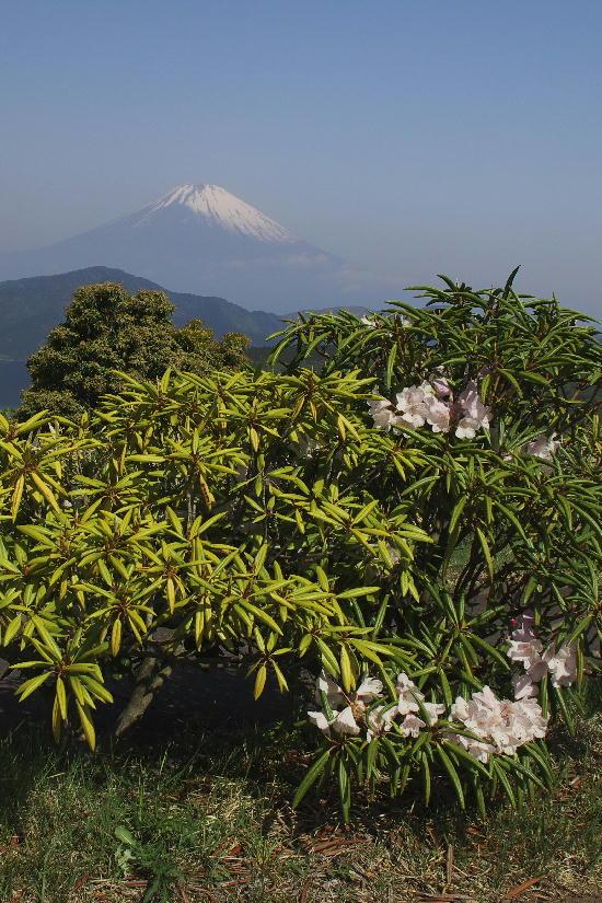 箱根大観山-3
