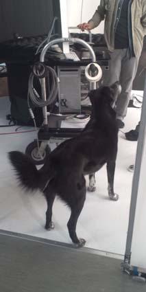 犬付スタジオ