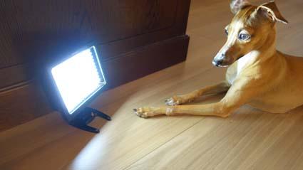 女優用ライト