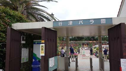 谷津バラ園1
