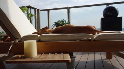 屋外ソファで昼寝する犬2