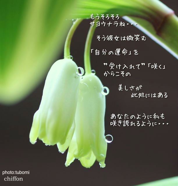 11220590_1119038670_181large_copy.jpg