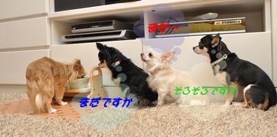 DSC_8002(1)