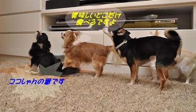 DSC_8006(1)