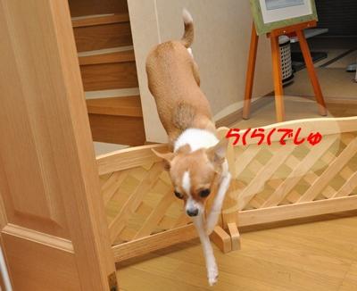 DSC_8585(1)