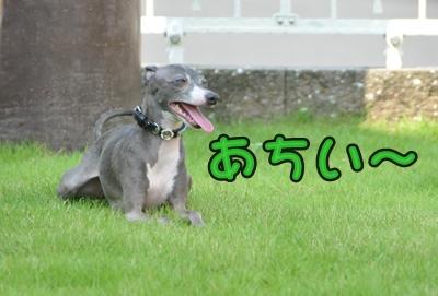 DSC_9768(1)