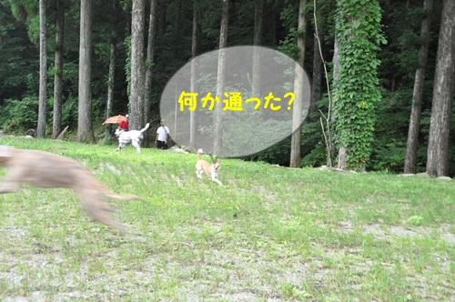 DSC_4153.jpg