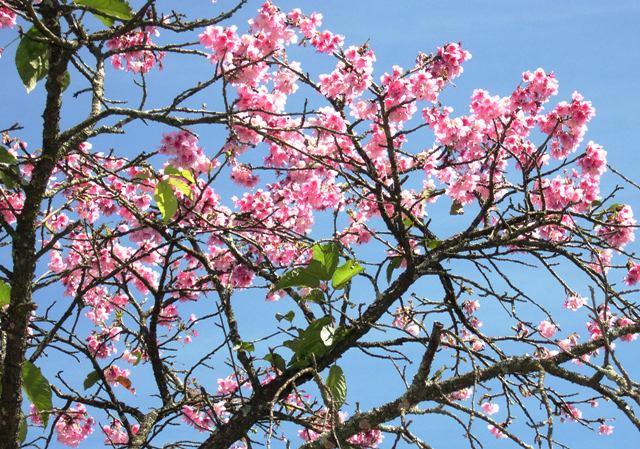 沖縄桜㈫七月二二日