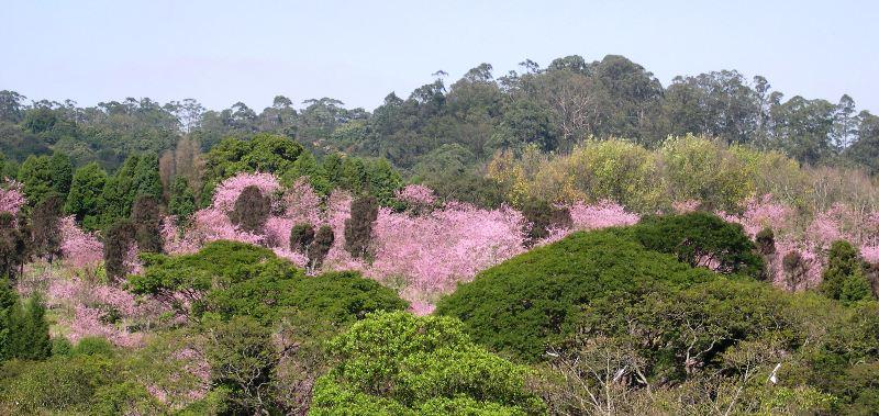 桜の園遠景㈰