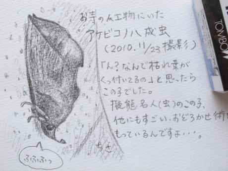 アケビコノハ・スケッチ