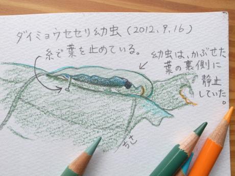 ダイミョウセセリ幼虫