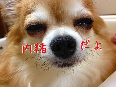 13_20120731214122.jpg