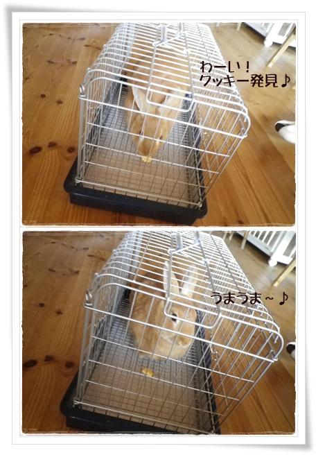 いなり怒5