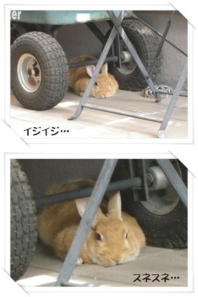 いなり怒7