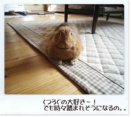 いなり怒13