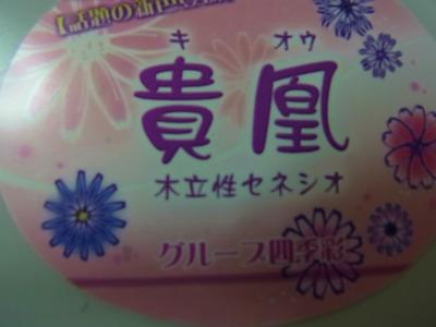 syukusyo-RIMG0597.jpg