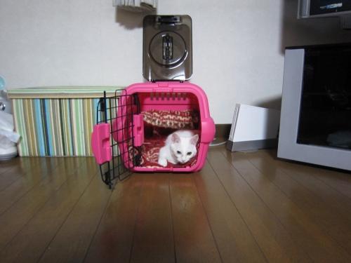 2011_12_09_23_26_35.jpg