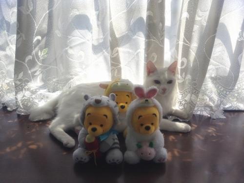 2012_04_15_11_09_51.jpg