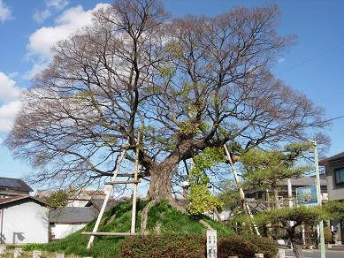 笠寺一里塚 1