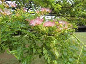 モアナルアガーデン 花