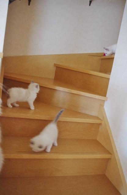 階段IMGP1801