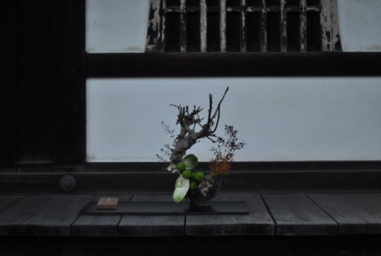11 bonsai