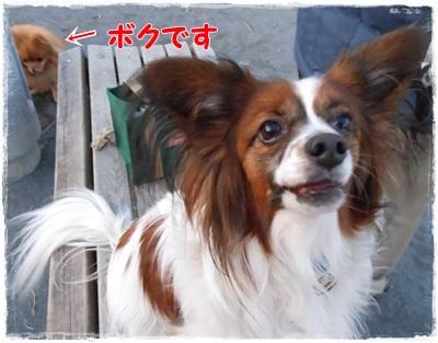 010_20121121211945.jpg