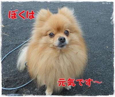 DSCN0784_20121101195502.jpg