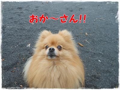 DSCN0785_20121101195502.jpg