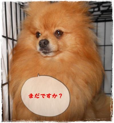 DSCN1189_20120507221135.jpg