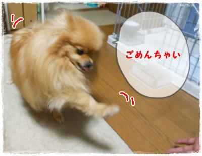 DSCN1643_20120515150259.jpg