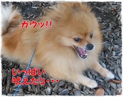 DSCN2104_20120815210732.jpg