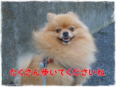 DSCN2411_20121022210704.jpg