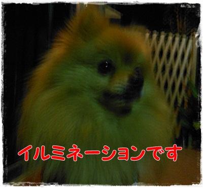 DSCN3191_20121208214357.jpg