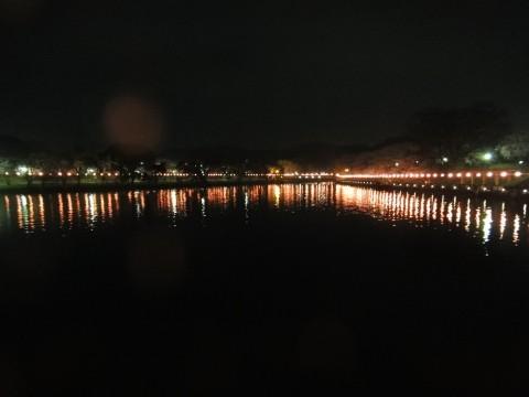 酒津の夜桜2